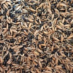 Biomasse automne Semences du Puy