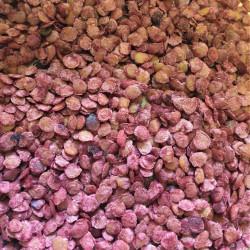 Graines de Cyphomandra betacea Semences du Puy