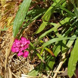 Jachère fleurie coloriage Semences du Puy