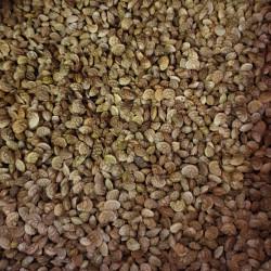 Onobrychis viciifolia Semences du Puy