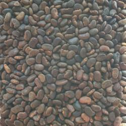 Graines de Robinia pseudoacacia Semences du Puy