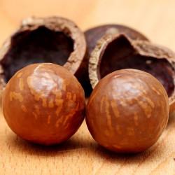 Macadamia integrifolia par Wow Phochiangrak de Pixabay