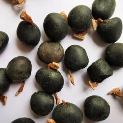 Graines de Gymnocladus chinensis - Semences du Puy